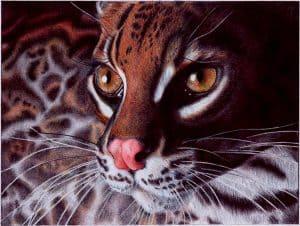 Margay Cat - Samuel Silva