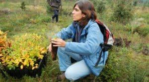 Marta Pinto ambiciona plantar 100 mil árvores na  Área Metropolitana do Porto